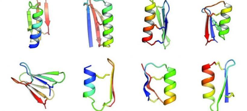 The Future of Peptides